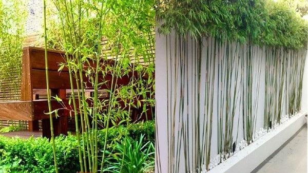 nên trồng cây gì trước nhà